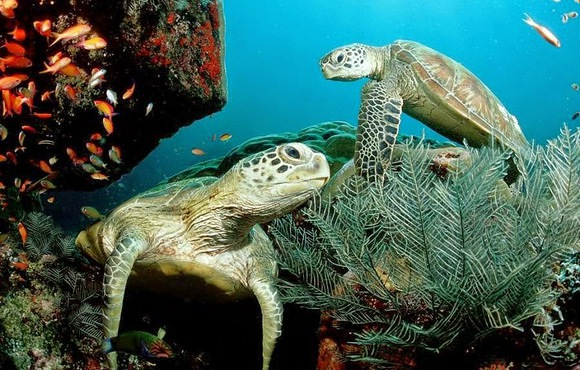 turtles_cancun