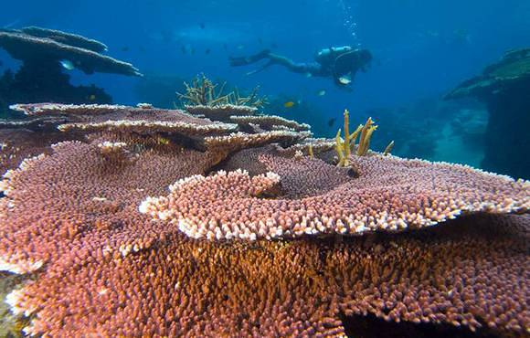 coral_reef_and_scuba_diver