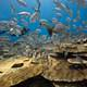 school_of_fish_raja_ampat