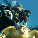 diver_and_turtle_