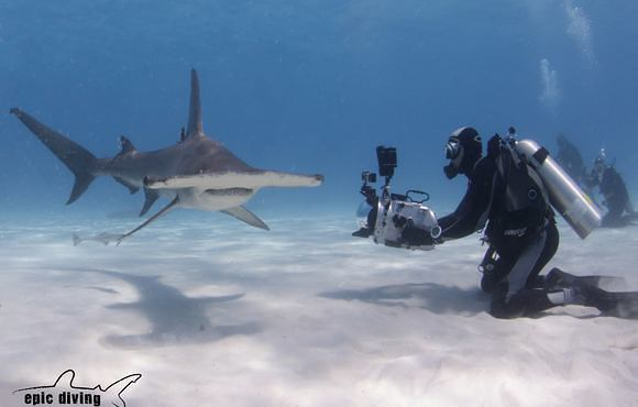 Filming_great_hammerheads