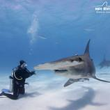 hammerhead_and_diver_bimini