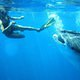 Mozambique_whaleshark