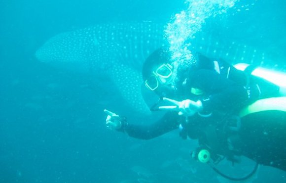 whale_shark_Sail_Rock