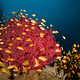 orange_fish_on_red_coral
