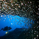 glass_fish_and_diver_in_cavern