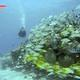reef_fish_playa_del_carmen