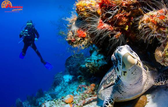turtle_on_reef_playa_del_carmen