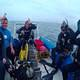shark_dive_south_africa