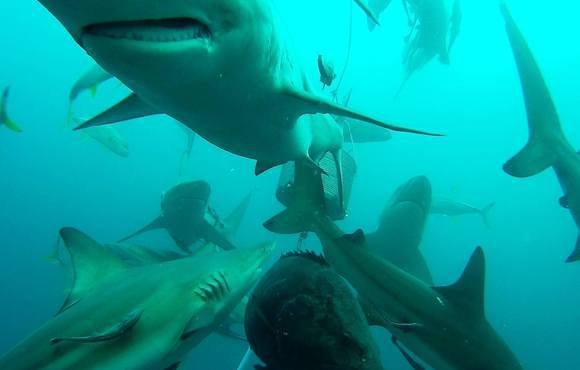 baited_shark_dive_south_africa
