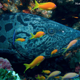 grouper_with_reef_fish