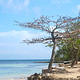 tree_on_beach
