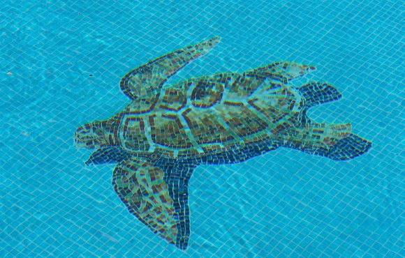turtle_in_pool