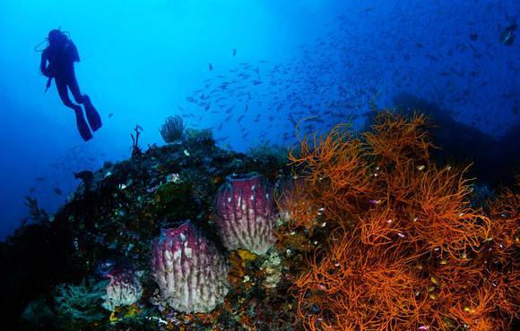 diver_on_coral_reef