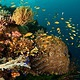 Coral_Reef_phillipines