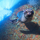 Puppy_sea_lion