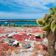 South_Plaza_island_galapagos