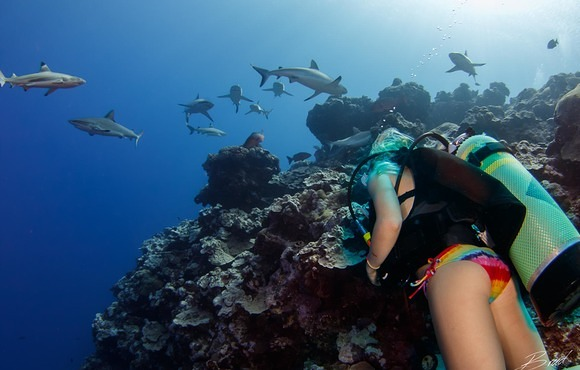 girl_and_sharks