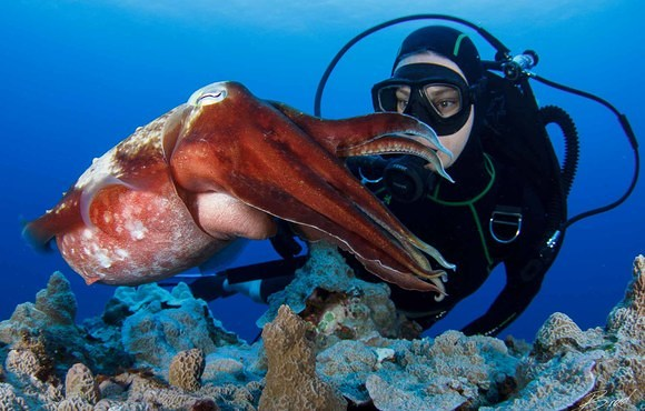 diver_and_red_octopus