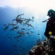 diver_with_sharks_in_Yap