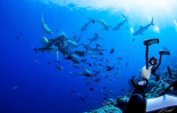 diver_photographing_shark_feeding_frenzy