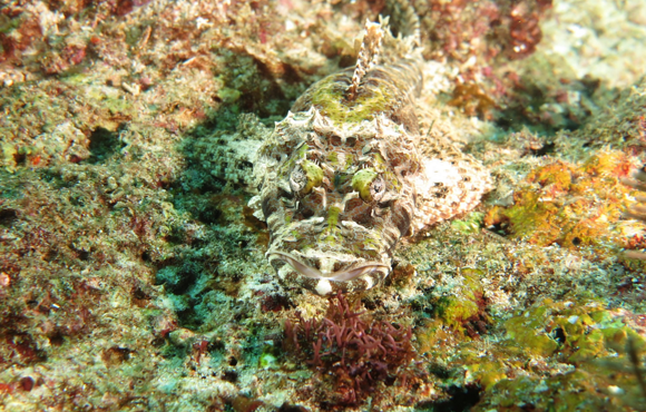 crocodile_fish