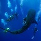Whale_Shark_with_Divers