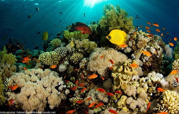 beautiful-coral-reef