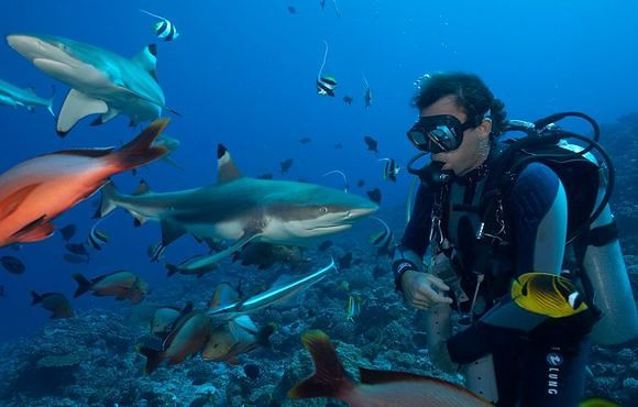 Diver_with_Black_Tip_Reef_Sharks