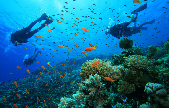 Divers_and_Orange_Fish